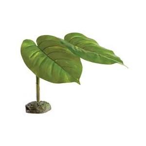 Planta Scindapus PT2973
