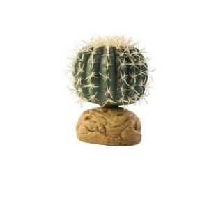CactusBarrilPeq PT2980