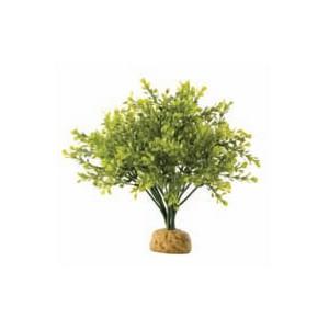 ArbustoBoxwood PT2994