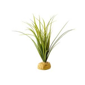 Turtle Grass Planta PT2996
