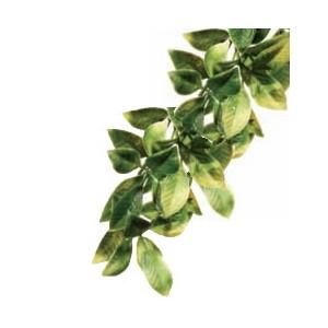PlantaPlasticaMandarin-Peq. PT3002