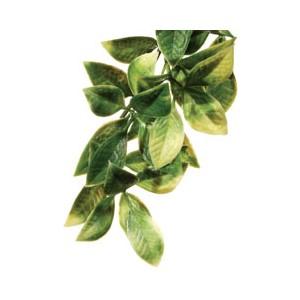 PlantaPlasticaMandarin-Gde. PT3022