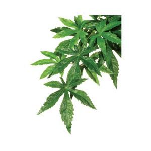 Planta de Seda Abuliton Peq. PT3032