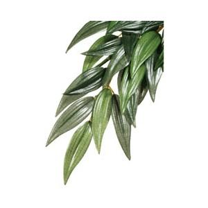 PlantadeSedaRucusMed. PT3041